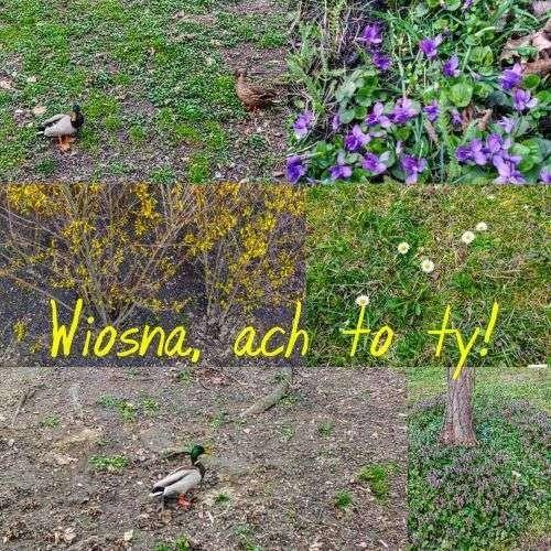 MORiUS Głogów Powitanie wiosny