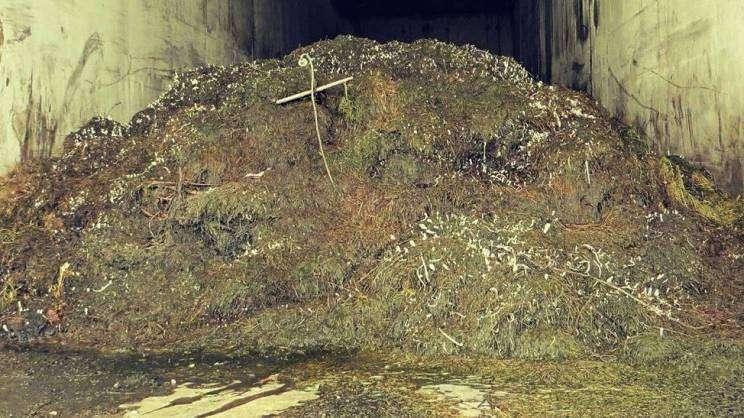 Kompostowanie w reaktorze trwa 2 tygodnie.