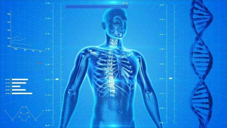 szkielet ludzki