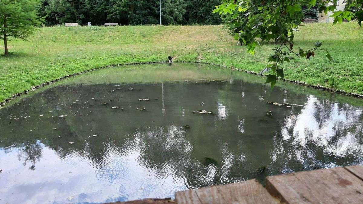 Małe-pływające-wodotryski-w-zbiornikach-wodnych-w-Głogowie_1_mini