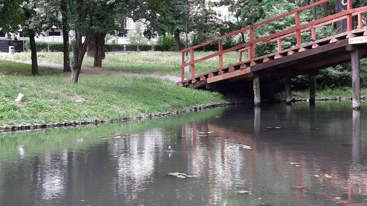 Małe-pływające-wodotryski-w-zbiornikach-wodnych-w-Głogowie_2_mini