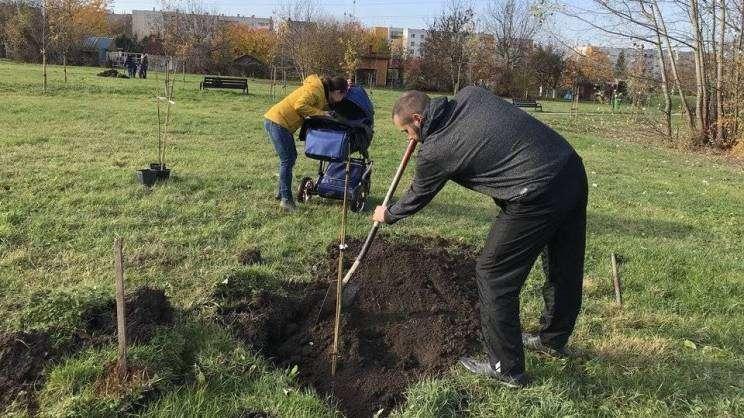 2019.11 sadzenie drzew w Głogowie
