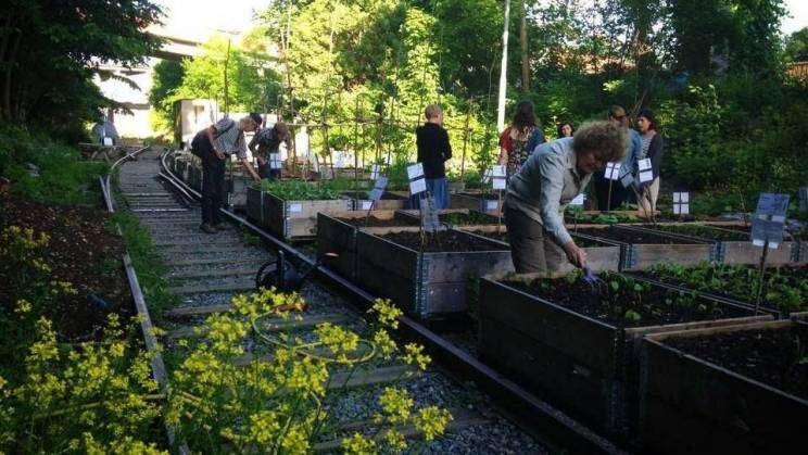 Miejski Ogród Społeczny.fot. facebook Głogów