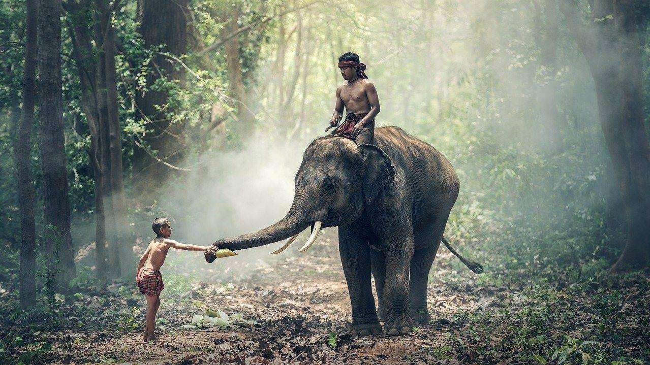 2021-04-29 słoń, Indie (fot. pixabay)