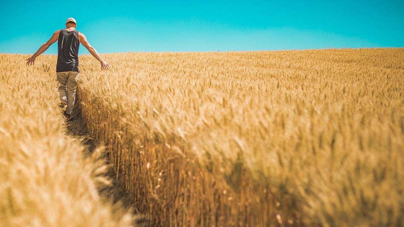 rolnik w polu, pixabay