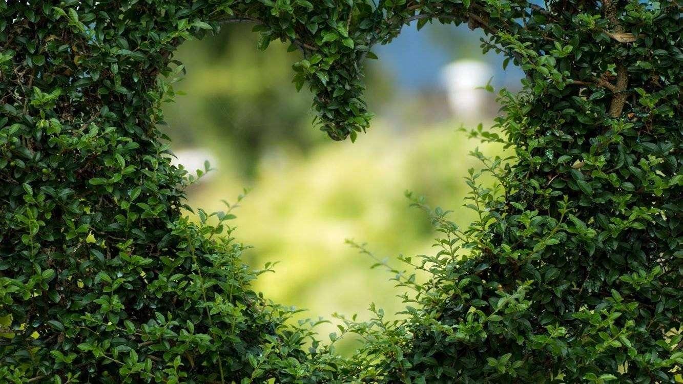 zieleń miejska, pixabay