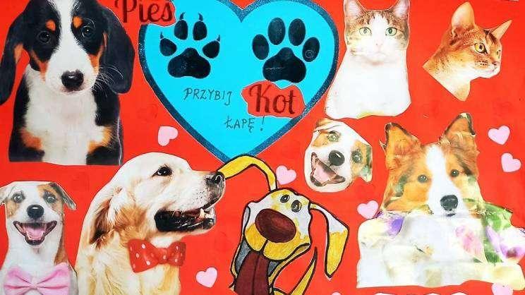 plakat zbiórka dla zwierząt